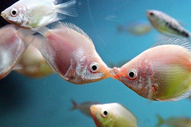 Muškarac koji se nalazi u ženi iz akvarijske vode